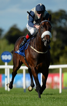Fascinating Rock was a deserved winner for Pat Smullen in the Champion Stakes. Pihoto: Cody Glenn / Sportsfile