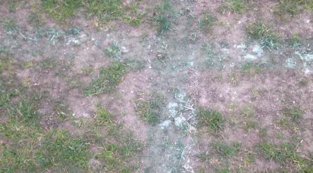 A section of the pitch at Stradbrook on Saturday