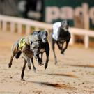 Paul Hennessy completed a double with Jaytee Dutch in 28.24 and Jaytee Jet in 28.43; the other Irish winners were Joe Hurley's Blue Cafu in 28.49 and Fraser Black's Droopys Awesome in 28.72.