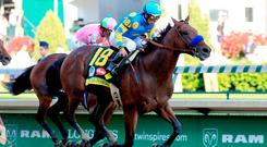 BREEDING MACHINE: Hopes are high that American Pharoah's progeny will be just as successful