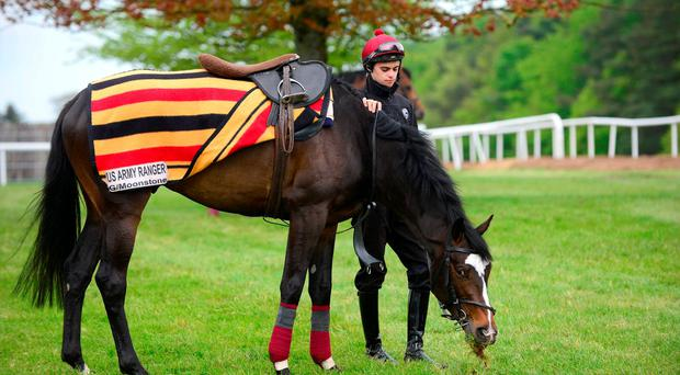 US Army Ranger has a pick of grass under the watchful eye of Donnacha O'Brien. Photo: Healy Racing