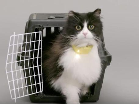 The Catterbox 'translates' cats' meows into human speech... sort of.