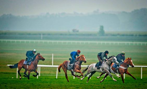 Dermot Weld's string gallop on the Curragh. Photo: ©INPHO/Morgan Treacy