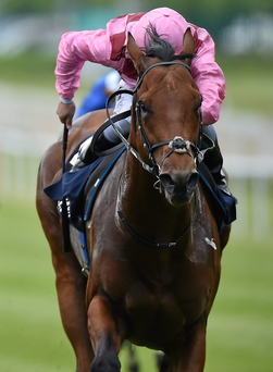 Ger Lyons has big hopes for Endless Drama in the Lockinge Stakes. Photo: Matt Browne / Sportsfile