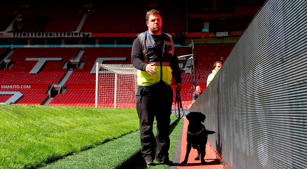 A sniffer dog works on the side of the pitch following the evacuation of Old Trafford yesterday. Photo: Getty