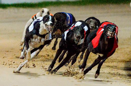 The race of the night can be Heat 7 where hopefully Pat Buckley's Droopys Roddick (8.51) can make a slick start and get the better of those formidable trackers You Never Listen and Eden The Kid Stock photo: Cody Glenn / SPORTSFILE