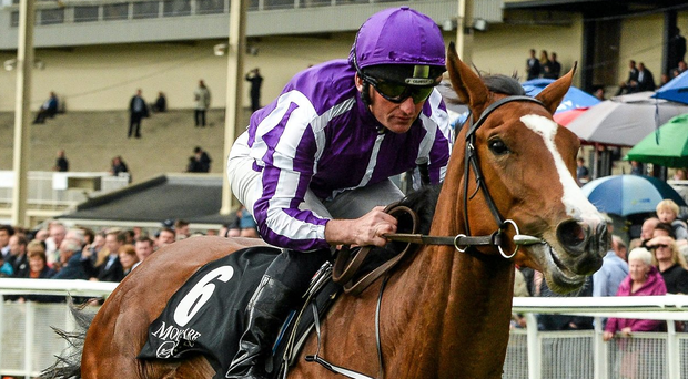 Minding remains very much in contention for next month's Investec Oaks. Photo: Cody Glenn / Sportsfile