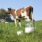 Tough negotiations: liquid milk producers are bracing themselves.