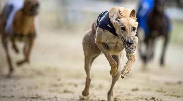 The quarter-finals of the English Derby will be run at Wimbledon tonight and there are Irish runners in all four heats, with four involved in Heat 3 where new favourite Jaytee Jet can emerge on top.