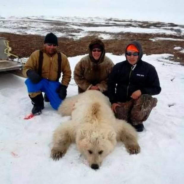 Inuit are allowed to hunt a small number of polar bears for their meat and fur Credit: Didji Ishalook/Facebook