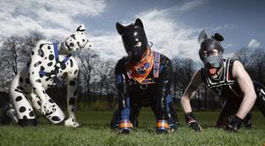 The Secret Life of Pups on Channel 4