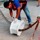 In this image made from video, rescue workers remove a python from a toilet outside a home in Chachoengsao, 90km east of the capital Bangkok, Wednesday, May 25, 2016
