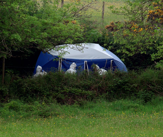 Garda forensic officers at the site where Neil Fitzgerald's body was found Photo: Collins