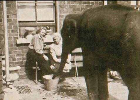 Shelia the baby elephant with sisters Denise and Beatrice Austin in their Whitewell Road home.