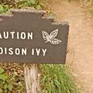 Poison Ivy warning