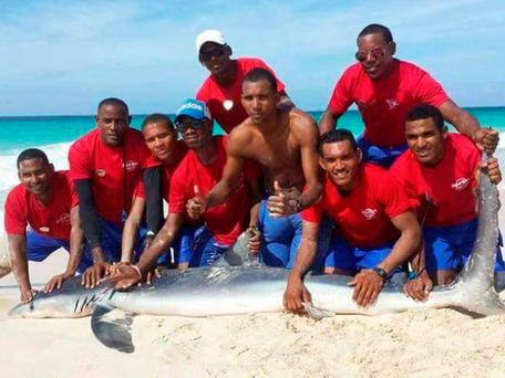 A video shows a group of men pulling it onto the beach with ropes Facebook/ Gary Stokes