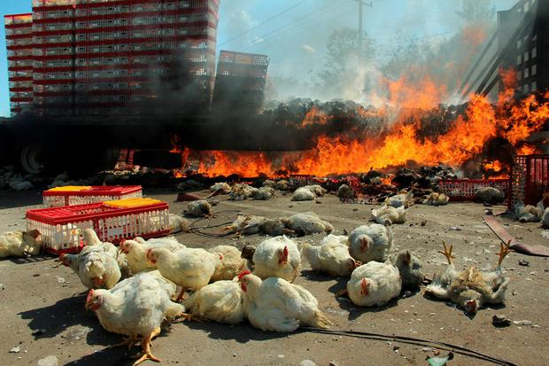 A burning truck, which was carrying chickens, is seen after clashes between riot police officers and protesters from the National Coordination of Education Workers (CNTE) teachers' union during a protest against President Enrique Pena Nieto's education reform, in the town of Nochixtlan, northwest of the state capital, Oaxaca City, Mexico June 19, 2016