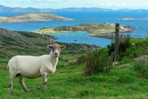 There has been anger amongst sheep farmers over environmentalists objecting to their fencing.