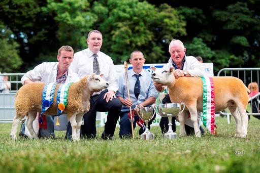 Gerard Niland from Kinvara, Co Galway with his Supreme Texel Champion 2016, PNE15076 and Anthony Donnelly, Claremorris, Co Mayo with his Reserve Supreme Texel Champion DII16003 pictured with Mark O'Rourke, Univet and Alastair Gault, judge.