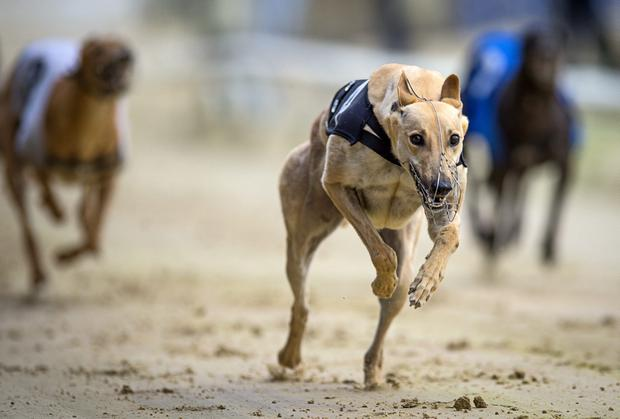 Owen McKenna's Farloe Rumble had been promoted to favouritism for the classic following a brilliant run in defeat in the opening round. (Stock picture)