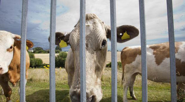 Bord Bia warned that Brexit is a significant challenge for Ireland's valuable agri-food industry, with the beef trade alone valued at €1.1bn.