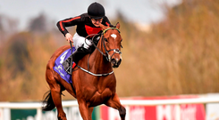 In denying the five-time Group One heroine by a head in last month's Curragh classic, Jet Setting executed one of the biggest acts of giant-slaying on the Flat for some time Picture: Matt Browne/SPORTSFILE