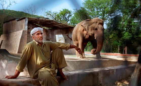 In this Tuesday, May 31, 2016, photo Pakistani caretaker Mohammad Jalal talks to the Associated Press next to an elephant 'Kaavan' at Marghazar Zoo in Islamabad, Pakistan. (AP Photo/Anjum Naveed)