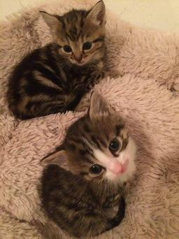 Look at those adorable little eyes / Phibsboro Cat Rescue Facebook