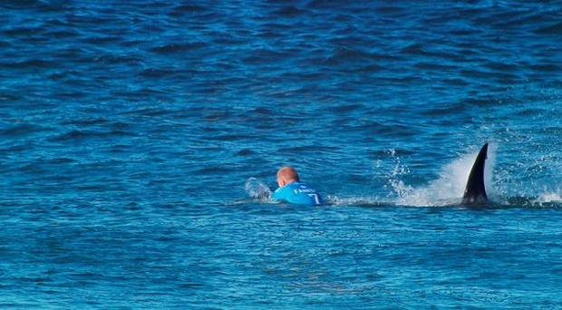 After after being attacked by a shark in the same area, Mick Fanning won the J-Bay Open title in Jeffrey's Bay, South Africa.