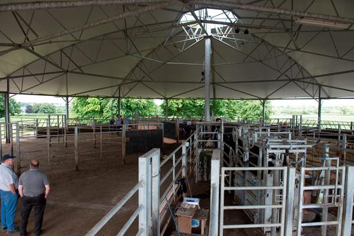 The roundhouse cattle shed maximises feeding space and improves cattle handling efficiency
