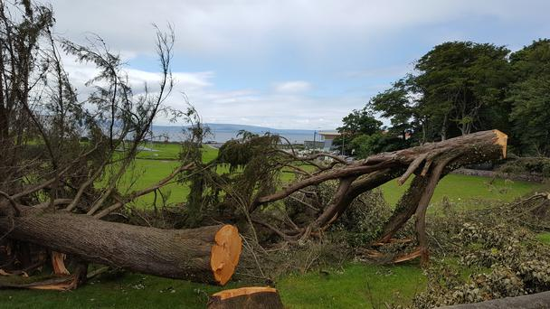 Galway City Council is investigating the felling of five mature trees in Salthill Park last weekend.