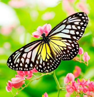 Worst year: Butterflies struggled in the cold spring