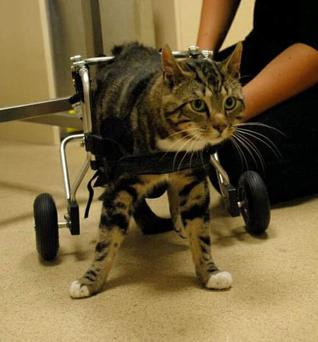 Chance pictured in his wheelchair