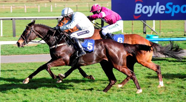 'Hopefully the classy Clondaw Warrior can make amends in the big one this afternoon.' Photo: Healy Racing
