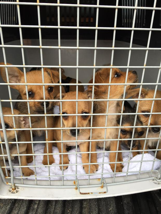 20 puppies and one mother dog were seized