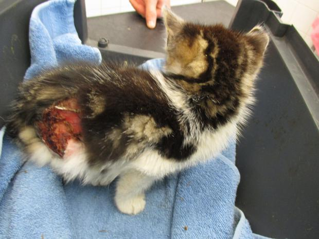 The ISPCA are appealing for information after a young kitten was rescued in Waterford city with severe burn wounds