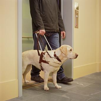 Guide dog (stock image)