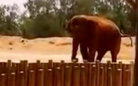 Rabat Zoo said it offered its condolences to the victim's family