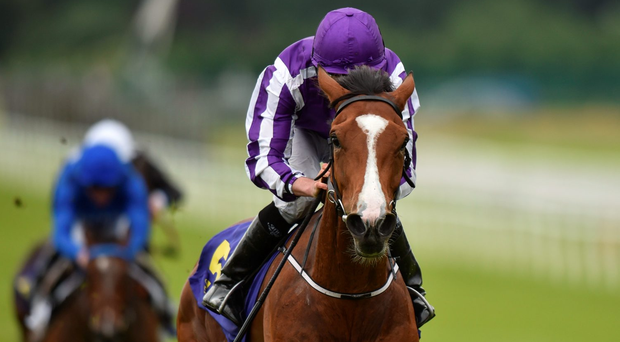 Minding, with Ryan Moore up, on their way to winning the Sea The Stars Pretty Polly Stakes at the Curragh Racecourse. Photo: Cody Glenn/Sportsfile