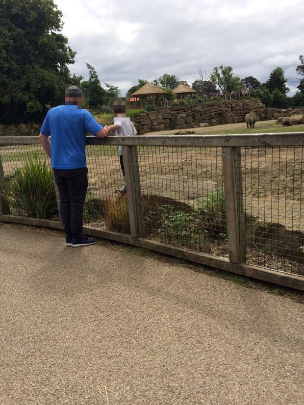 Dublin Zoo investigating after child climbs into rhino enclosure. Photo: Twitter/Adrianna Straszewska
