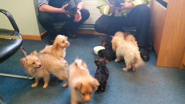 The seized puppies. Picture: An Garda Síochana Facebook