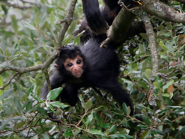 "Teresa Power, Primate Lead Warden at Fota Wildlife Park, described the birth as ""joyous""."