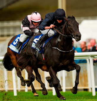 Caravaggio, pictured here on the way to winning the Marble Hill Stakes under Ryan Moore, is fancied to sore again at The Curragh, tomorrow. Photo by Paul Mohan/Sportsfile