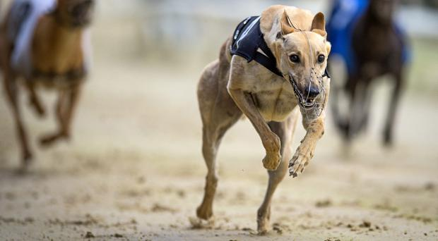 The likelihood at the moment is that there will be 20 or 21 heats with the last twelve comprising the Saturday card and the remainder being run on Thursday. Stock photo: Getty