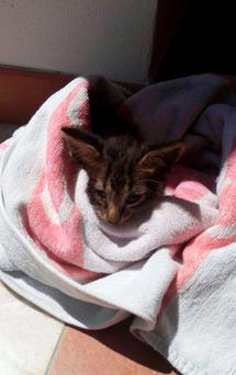 In this photo taken on Friday, Aug. 5, 2016 and provided by the Italian Coast Guard, a kitten is wrapped in a towel after being rescued from downing, off the coast of Marsala in Sicily, Italy
