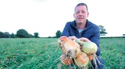 James Hughes inspects his crop of onions ahead of harvest near Julianstown, Co Meath. It is the first Irish onion crop being specially grown for Aldi