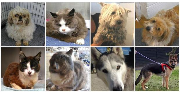 If you're one of the unlucky people who has lost their animal, you can contact the DSPCA on 01 4994700 or email lost@dspca.ie.