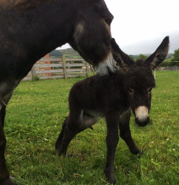 Timmy and his mum Twilight. Photo: Donegal Donkey Sanctuary