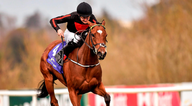 Jet Setting pleased connections in a gallop yesterday morning as she continues her preparation for the Coolmore Stud Fairy Bridge Stakes at Tipperary. Photo: Sportsfile