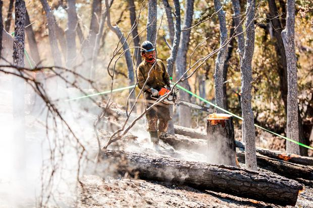 A firefighter with the Elk Mountain Hotshots cuts down a tree destroyed in the Clayton Fire in Lower Lake, California, August 16, 2016